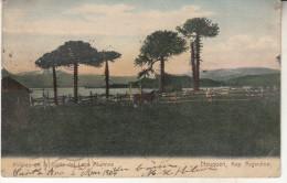 Argentina Pinares En La Costa Del Lago Alumine - Argentine