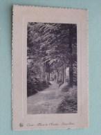 ORROIR Sous Bois Mont-de-l´Enclus ( M Damiens ) Anno 19?? ( Zie Foto Voor Details ) !! - Mont-de-l'Enclus