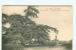 LAVAUR / Grand Cèdre / ARBRE - Lavaur