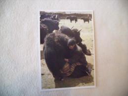 TUSHITA..UWE MAYA..NOMAD - Tibet