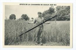 CPA - Effets De La Cianamide De Chaux Sur Blé - Agricole- - Cultures