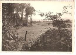 La Houppe-Flobecq - Panorama Vers Flobecq Vu Du Boi. -- 1963 - Flobecq - Vloesberg