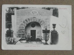 MONTECATINI -SORGENTE ACQUA OLIVO -INIZI 900     CP  -  FP  - BELLISSIMA ANIMATA - Italia