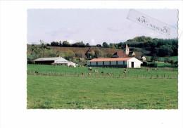 39 - MOLAMBOZ - Jura - Le Petit MOLAMBOZ Et L´Eglise De Mathenay - 2003 - Vaches Au Pré - France