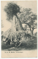 D.S.W. Afrika Termitenhugel German South West Africa Nid De Termites No 148 - Namibie
