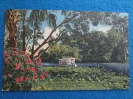 Looking Over Water Hyacinths. Down The Springs Run At Silver Springs, Florida - Silver Springs