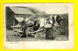 ZEELAND WALCHEREN ZEEUWSCHE PAARDENSPAN BOER PAARD Landbouwer - ATTELAGE CHEVAL PAYSAN CHEVAUX Zeeuws-Vlaanderen 2786 - Spannen