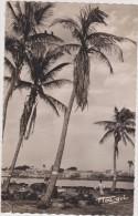 Afrique Coloniale, Afrique Occidentale Française,Sénégal,SAINT LOUIS - Sénégal