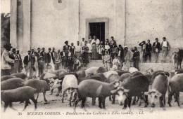SCENES CORSES   Bénédiction Des Cochons à ZILIA - Non Classés