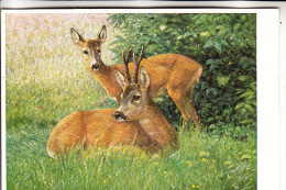 JAGD - HUNTING - JACHT - CHASSE - CACCIA - CAZA - LOWIECTWO - Rehbock, Reh, Künstler-Karte Ch.Haug - Altri