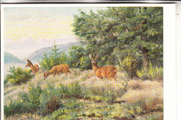 JAGD - HUNTING - JACHT - CHASSE - CACCIA - CAZA - LOWIECTWO - Rehe, Künstler-Karte F.Reimann - Postkaarten