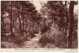 84 - BANDOL - Promenade Dans Le Bois Morin - Bandol