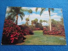 Colorful Azaleas And Stately Palms On Lake Ivanhoe, Orlando, Florida - Orlando