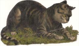 Chromo CHAT 10cm TB - Animals