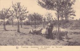"POPERINGE : sanatorium ""St Idesbald"" op ""De Lovie"" - De Schaapherder - mouton"