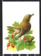 BUZIN - CARTE BLANCO - ROSSIGNOL PHILOMELE - 1985-.. Uccelli (Buzin)