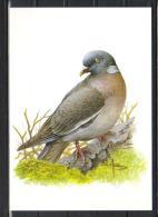 BUZIN - CARTE BLANCO - PIGEON RAMIER - 1985-.. Uccelli (Buzin)