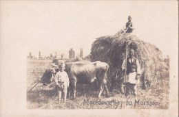 MACEDOINE / CARTE PHOTO - LA MOISSON EN 1917 - Animation - Macédoine