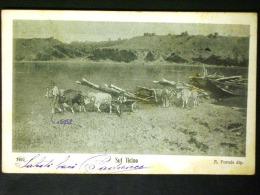 LOMBARDIA -PAVIA -VIGEVANO TICINO -F.P. LOTTO N 431 - Pavia