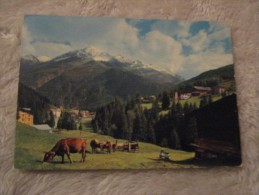 Sondrio - Valfurva - San Caterina - Panorama 1970 Animali - Sondrio