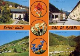 Saluti Dalla Val Di Rabbi - 2805 - Formato Grande Viaggiata - Trento