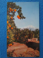 It´s Summer All Year ´round In Southern California´s Fertile San Bernardino Foothills And United Links This Beautiful... - San Bernardino