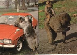Postcard - Bear & Monkeys At Woburn Wild Animal Kingdom. CKWOB127 - Monkeys