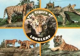 Postcard - Tigers At Longleat. 2EAT31 - Tigers