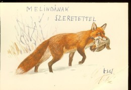 Postcard, Hungary, Noncirculated, Red Fox, Grafika Muray Robert - Illustrateurs & Photographes