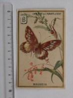CHROMO ABBAYE D´IGNY Chocolat (FISMES): Papillon BRISEIS - BOGNARD - Cromos