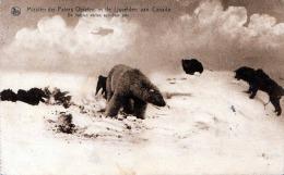 Kanada, Missien Der Paters Oblaten In De Ijsvelden Van Canada, De Honden Vallen Een Beer Aan,Wölfe Fallen Einen BÄREN An - Kanada