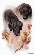 [DC5183] CARTOLINA - ANIMALI - CANI - GOLDEN RETRIEVERS - Non Viaggiata - Old Postcard - Chiens