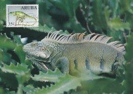 D19441 CARTE MAXIMUM CARD 1994 ARUBA - IGUANA CP ORIGINAL - Reptiles & Amphibians