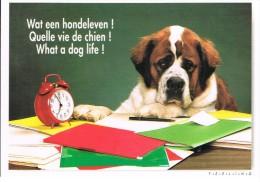 Saint Bernard : Quelle Vie De Chien ! - Wat Een Hondleven !  What A Dog Life! - Chiens