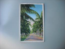 ETATS UNIS FL FLORIDA ROYAL PALM WAY IN PALM BEACH - Palm Beach