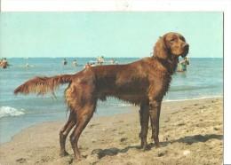 CANE .VIAGGIATA -1970.FG.T1155 - Hunde