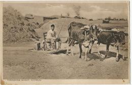 Chypre Cyprus Thrashing Wheat Moulin Ox Mill  Attelage Boeuf Edit Mangoian Nicosia - Chypre