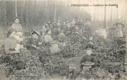 Poperinge - Cueuillette du Houblon