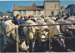 SAINT CHRISTHOPHE EN BRIONNAIS - La Célèbre Foire Aux Bestiaux - Other Municipalities