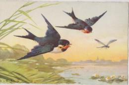 Cpa,signée,illustrateur,a Rtiste Reconnue,klein,n°129,l´oi Seau,libellule,la Liberté De Voler,la Nature,l ´eau,la Vie - Klein, Catharina