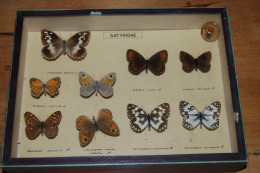 Entomologie Ancienne - Boîte Vitrine Papillons Satyridae - 19,5 X 26 X 5,5 Cm - RARE - TRÈS BON ÉTAT - Other