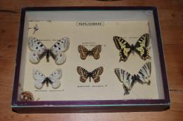 Entomologie Ancienne - Boîte Vitrine Papillons Papilionidae - 19,5 X 26 X 5,5 Cm - RARE - BON ÉTAT - Otros