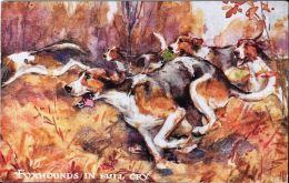 [DC5196] CARTOLINA - ANIMALI - CANI PER LA CACCIA ALLA VOLPE - FOXHOUNDS IN FULL CRY - Viaggiata 1923 - Old Postcard - Chiens