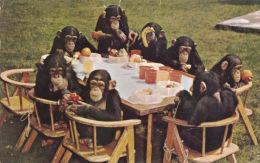 CHIMPS TEA PARTY POSTCARD - Monkeys
