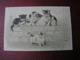 == Katzen Litho  Frankfurt 1901 - Cats