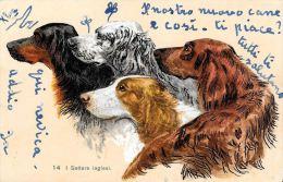 [DC5202] CARTOLINA - ANIMALI - CANI - I SETTERS INGLESI - Viaggiata 1907 - Old Postcard - Chiens