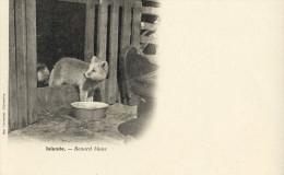 CPA (  Islande Pays Nordique) ISLANDE Renard Blanc - Cartes Postales