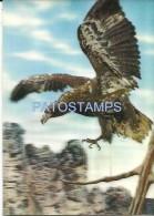 722 ART ARTE THREE DIMENSIONAL 3D 3 D HALCON HAWK IN FLIGHT NO POSTAL POSTCARD - Old Paper