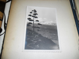 Photographie Ancienne Paysage De Tenerife Santa Cruz N°2, Tampon Photo A. Denitez - Lieux