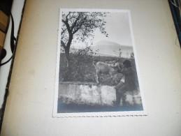 Photographie Ancienne Enfant Et Chevreau De Tenerife Santa Cruz N°3, Tampon Photo A. Denitez - Places